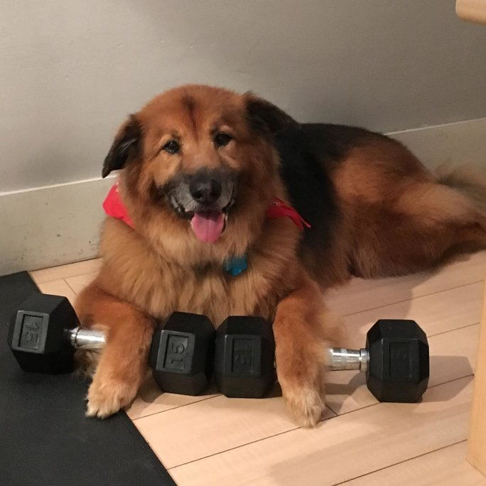 เมื่อ Chunk graduated to 15-pound weights after putting in all those hours at the gym.