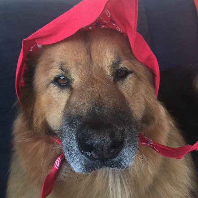 เมื่อ Chunk pretended to be Little Red Riding Hood.