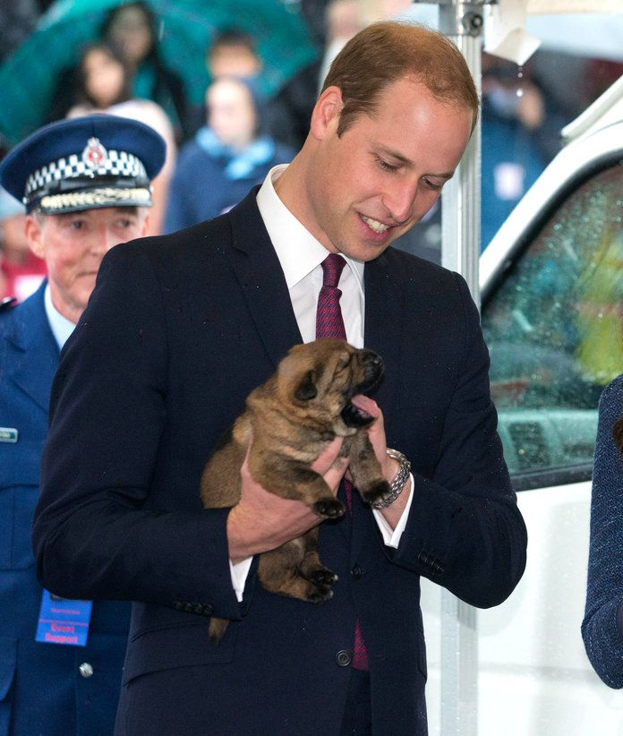 पुरुषों with Animals - Embed - Prince William